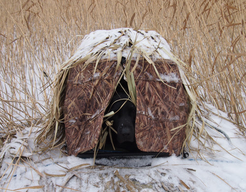 Avery Ground force dog blind with labrador retriewer