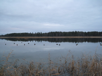 Calm and overcast morning at duck bling