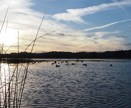 Landing zone for ducks